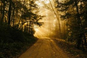 rayon_soleil_forêt