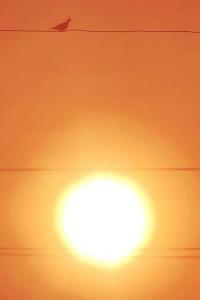 soleil_oiseau
